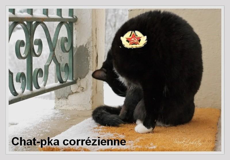 Contorsion .. Chat-pka