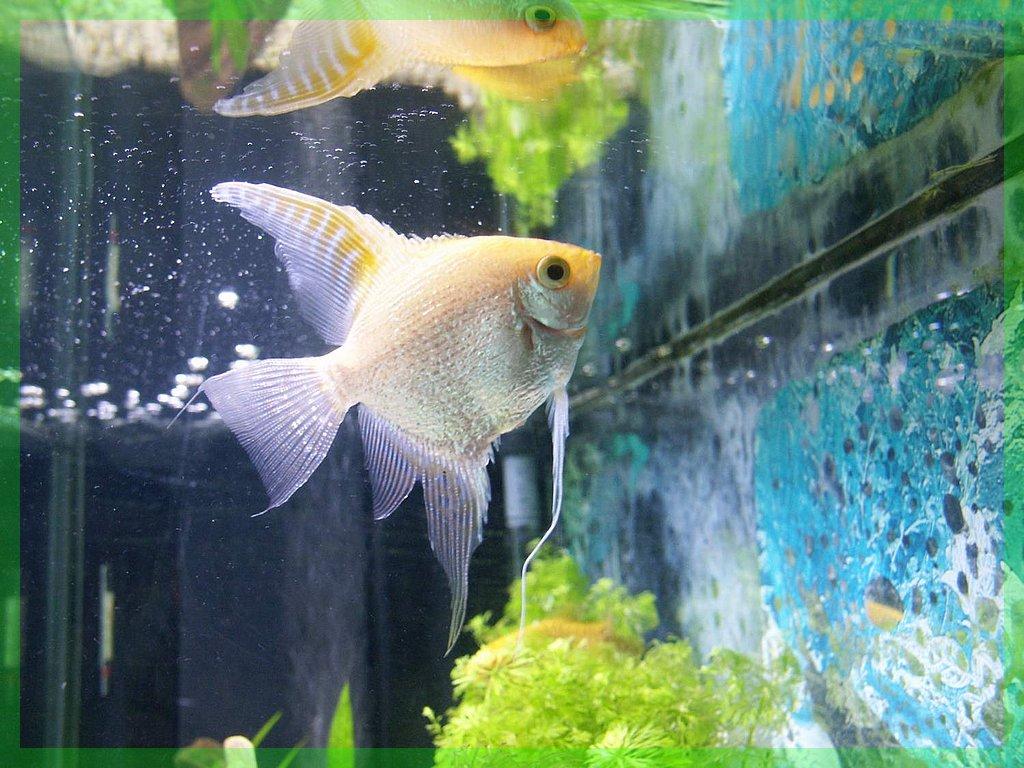 Aquarium Fil-aquarium