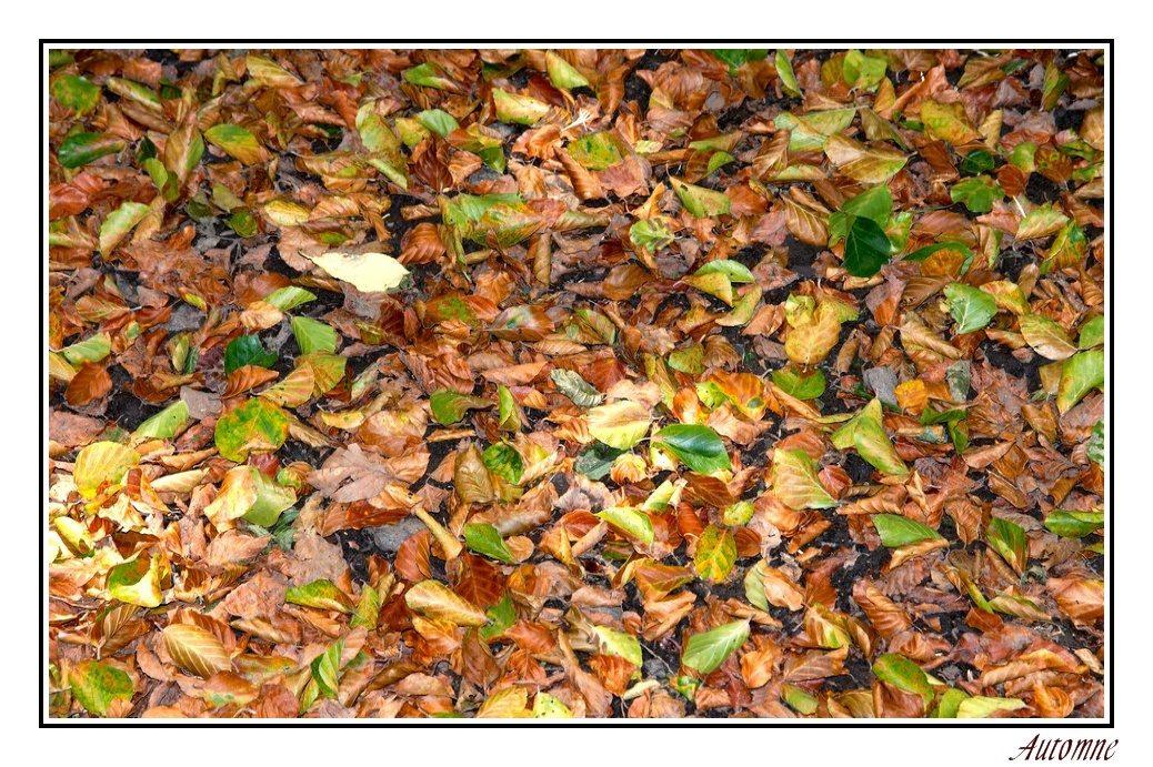 Tapis de feuilles Soldautomne