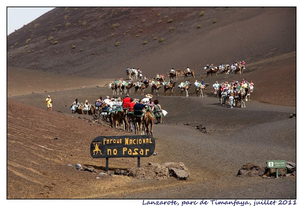 Lanzarote (série 2) : les animaux DSC07882