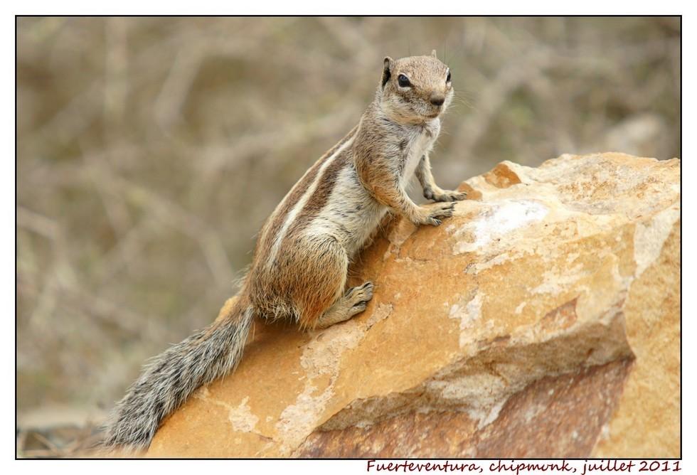 Lanzarote (série 2) : les animaux DSC07966