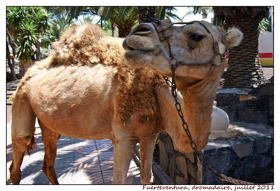 Lanzarote (série 2) : les animaux DSC07979