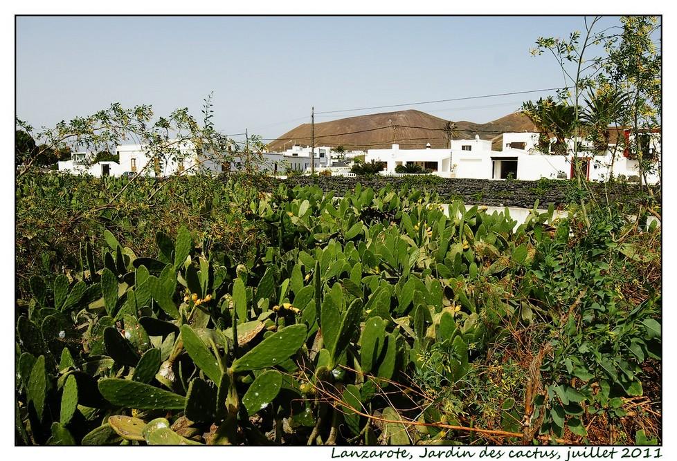 Lanzarote (série 1) : les cactus Cactus01