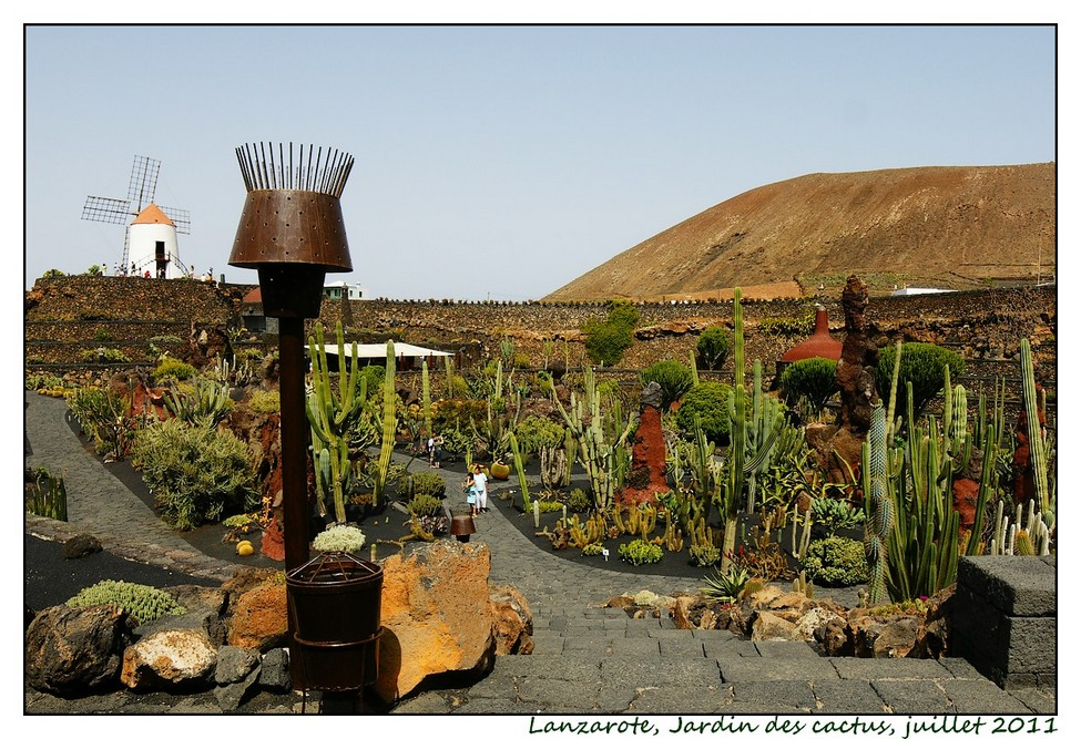 Lanzarote (série 1) : les cactus Cactus04