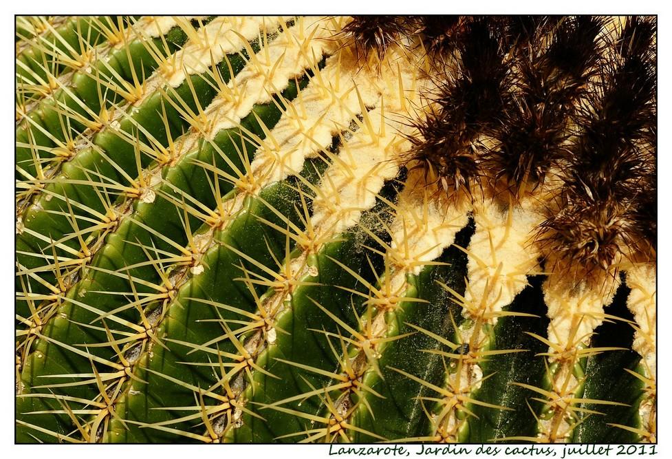 Lanzarote (série 1) : les cactus Cactus06