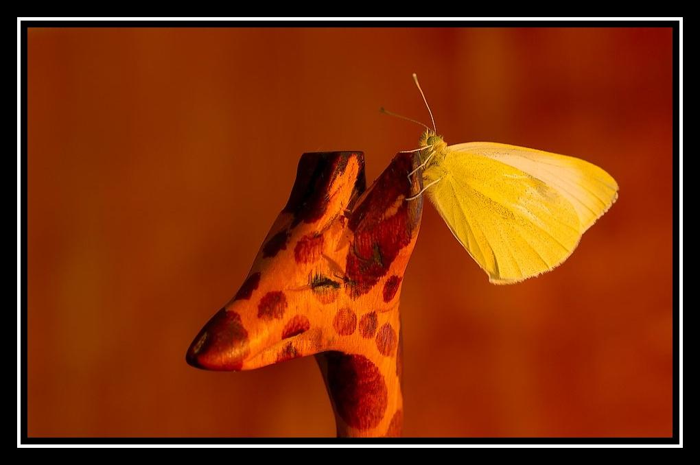 Papillon de Noël Papillon-girafe