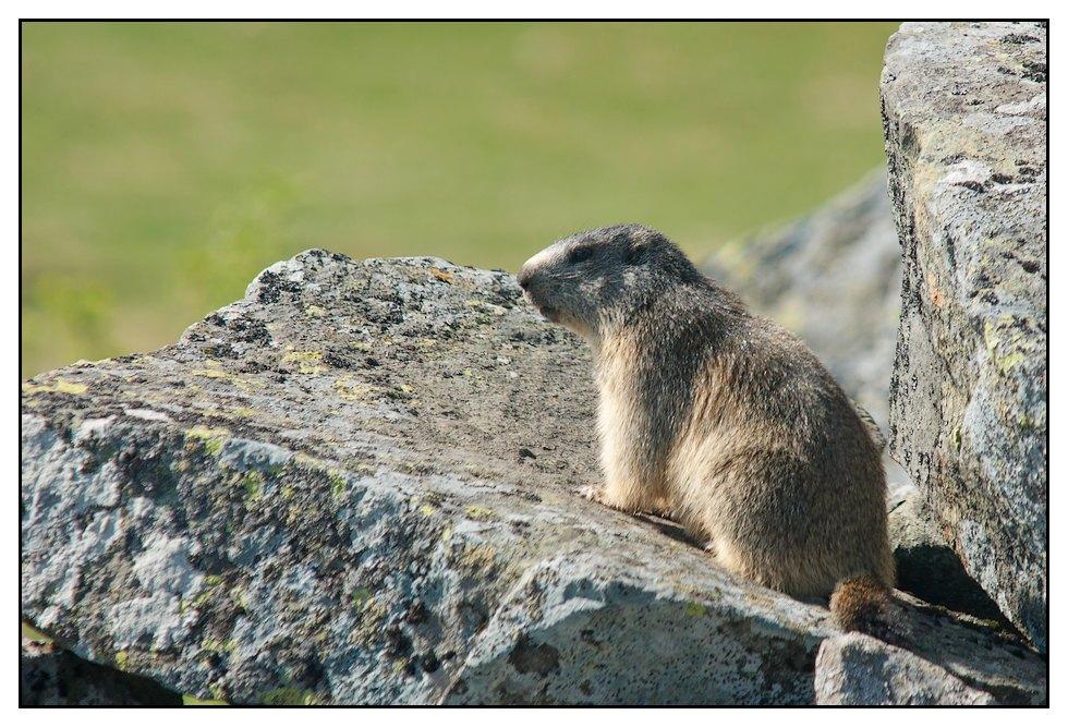 Marmottes 2011 Marmotte1