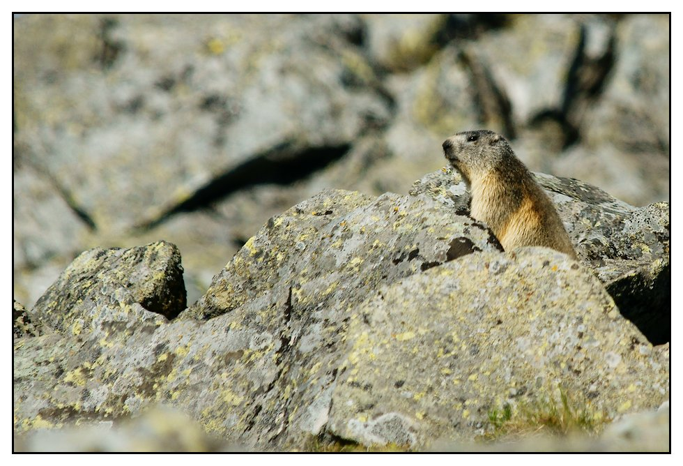 Marmottes 2011 Marmotte2