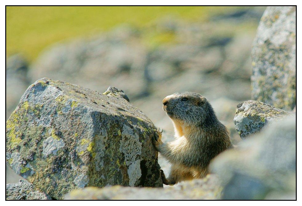 Marmottes 2011 Marmotte4