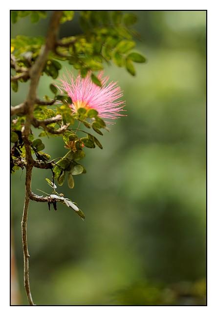 Les Antilles : quelques fleurs Fleurs2