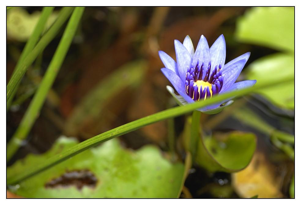 Les Antilles : quelques fleurs Fleurs3