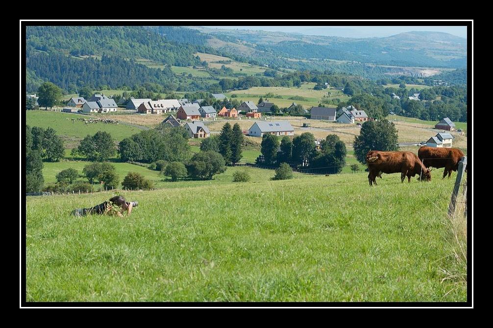 Les dernières nouvelles - Page 5 Affut-vache